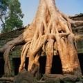 angkor wat - PhotoDune Item for Sale