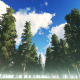 The Forest - VideoHive Item for Sale