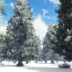 Snowy Winter Forest - VideoHive Item for Sale