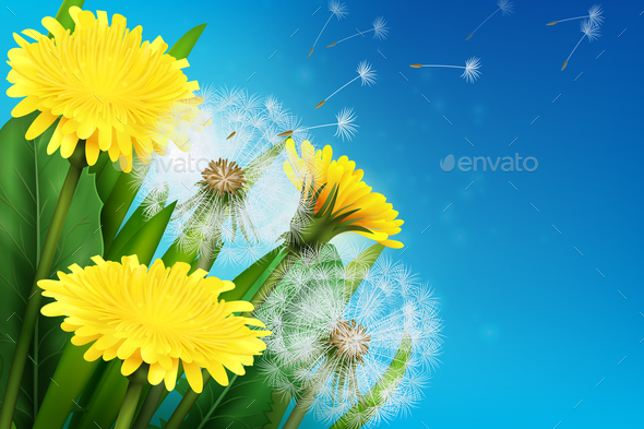 GraphicRiver Realistic Dandelion Illustration 20848548
