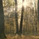 Morning Autumn Forest - VideoHive Item for Sale