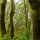 Rainforest Jungle Wild Birds Loop