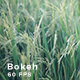 Rice Field  - VideoHive Item for Sale