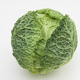 savoy cabbage on a white background - PhotoDune Item for Sale