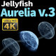 Jellyfish Aurelia 3 - VideoHive Item for Sale