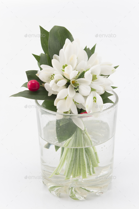 Bouquet of Fresh Snowdrops in a Glass of Water - Stock Photo - Images