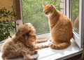 Dog and the cat on the window