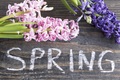 Word Spring with Hyacinths on a  Wooden Background