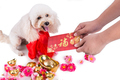 Giving red envelop with Good Luck word to dog