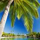 Palm tree hanging over stunning lagoon - PhotoDune Item for Sale