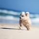 Small cute dog running on a white beach - PhotoDune Item for Sale