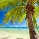 Small palm tree hanging over blue lagoon - PhotoDune Item for Sale