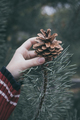Fir cone in the hand of teenager. - PhotoDune Item for Sale