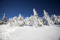 Snow covered pine trees in the high mountains - PhotoDune Item for Sale
