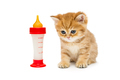 Small British kitten and bottle of milk  - PhotoDune Item for Sale