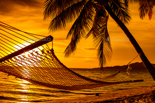 Silhouette Of Hammock And Palm Trees On A Beach At Sunset   Stock Photo    Images