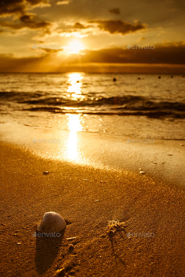 Waves approaching sea shell on beach during sunset - Stock Photo - Images