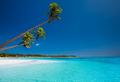 Few palms on deserted beach of tropical island