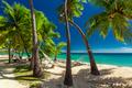 Empty hammock in the shade of palm trees on tropical Fiji Island