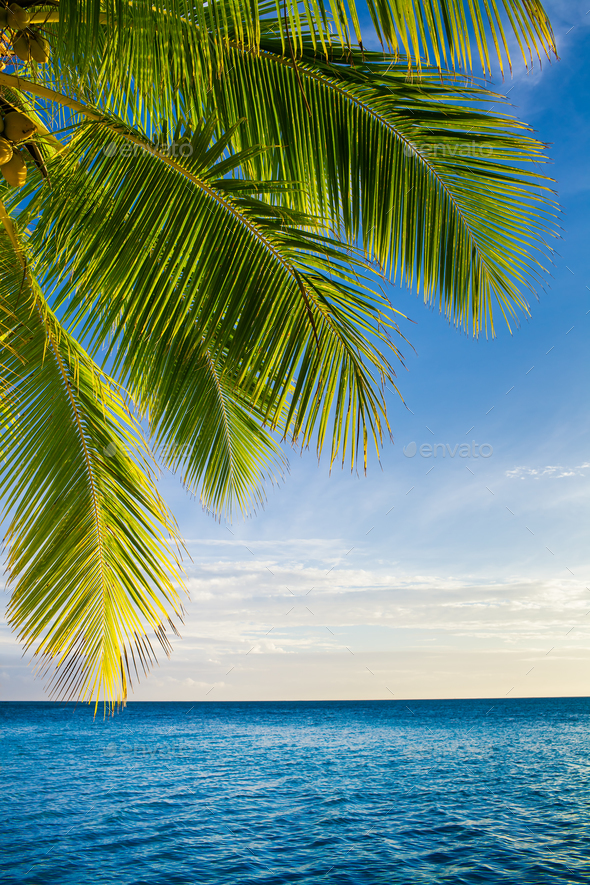 Coconut palm tree leaves over endless ocean - Stock Photo - Images