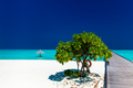 Beautiful tropical sandy beach with wodden jetty and single tree