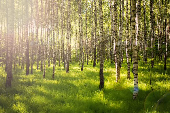 Summer forest - Stock Photo - Images