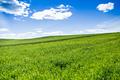 Green landscape - PhotoDune Item for Sale