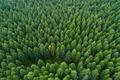 aerial shot of forest landscape - PhotoDune Item for Sale