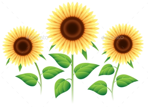 Sunflower Cartoon Icons Set - Flowers & Plants Nature