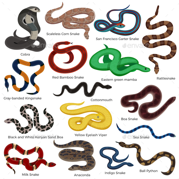 Poisonous Snakes Cartoon Set - Animals Characters
