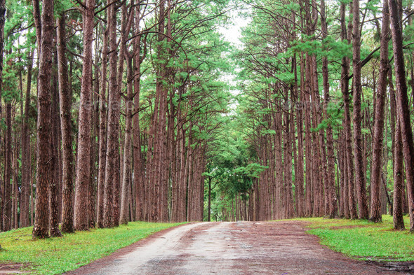 Pine trees in garden - Stock Photo - Images