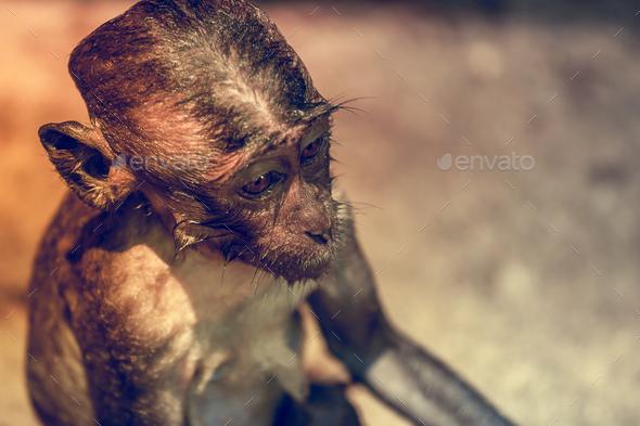 Monkey looking - Stock Photo - Images