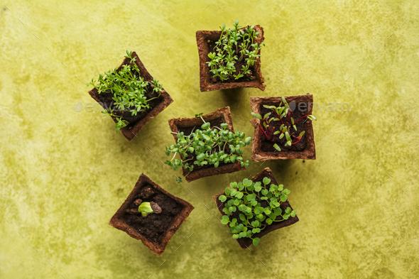 Seedlings growing - Stock Photo - Images