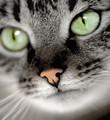 green-eyed cat - PhotoDune Item for Sale