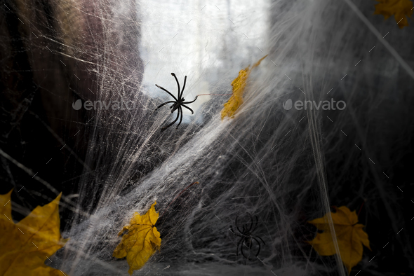 Cobweb or spider's web against a black background, - Stock Photo - Images