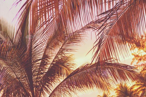Retro Sunset On Palm Trees - Stock Photo - Images