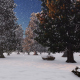 Panorama Winter Forest - VideoHive Item for Sale