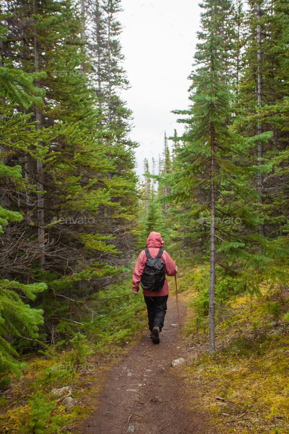 Hiking rainy autumn fall boreal forest taiga trail - Stock Photo - Images