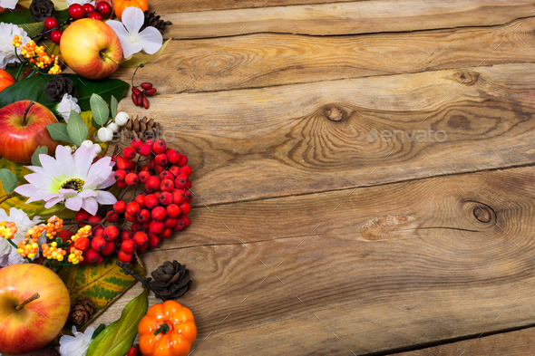 Thanksgiving background with rowan and white daisy, copy space - Stock Photo - Images