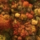 Looking Down on Amazingly Beautiful Autumn Colors,forests,trees, Aerial Drone Flyover View. - VideoHive Item for Sale