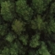 Aerial Nature View of Green Wild Forest - VideoHive Item for Sale