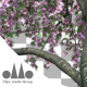 Photorealistic Sakura Tree Ver.3.2 - Pink & Green - VideoHive Item for Sale