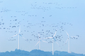 wind farm and migratory birds