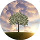 Growing Tree Animation - VideoHive Item for Sale