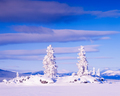 Snowy Honey Moon Island Tagish Lake Yukon T Canada - PhotoDune Item for Sale