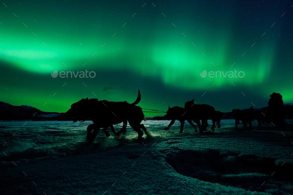 Yukon sled dog team pulling under northern lights - Stock Photo - Images
