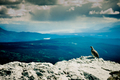 Rock Ptarmigan wilderness landscape Yukon Canada - PhotoDune Item for Sale