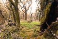 Ghostly virgin mountain rainforest Marlborough NZ - PhotoDune Item for Sale