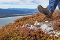 Hiker hiking above Little Atlin Lake Yukon Canada - PhotoDune Item for Sale