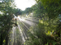 Sunlight rays beam through dense tropical jungle - PhotoDune Item for Sale